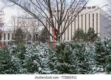 WASHINGTON, DC, USA - DECEMBER 10, 2017: Encapsulating the season, a Christmas tree lot is across from the Russian Embassy in Washington, DC.