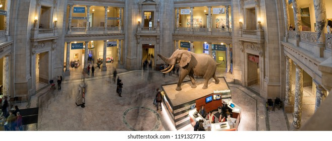 Washington DC, USA - Feb 25, 2018: The African Elephant in the Museum of Natural History.