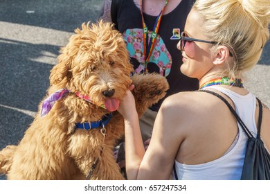WASHINGTON, DC, USA - JUNE 10, 2017: A woman and her dog celebrate Pride Day in Washington, DC.