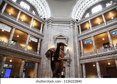 WASHINGTON DC, USA - JUNE 14, 2018: BIG Animal in center hall at the National Museum Washington D.C.,USA