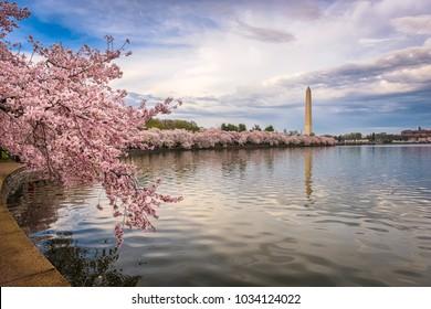 Washington DC, USA in spring season at the tidal basin.