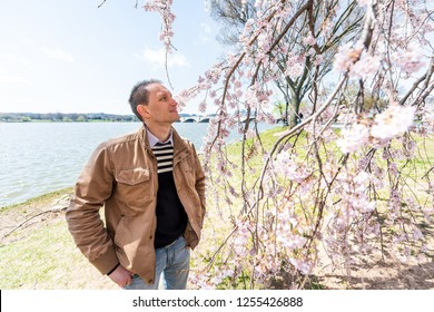 Washington DC, USA Tourist people, young person, man, male standing by cherry blossom sakura tree branch in spring with potomac river, memorial bridge, national mall enjoying sunny weather, smelling