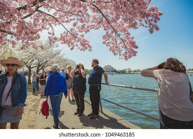 Washington, DC/USA 041315: Tourists walking, taking pictures under flowering cherry blossom trees in spring in Washington, DC on the Tidal Basin with Jefferson Memorial in view