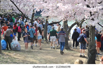 Washington D.C./USA- 04/16/2014: A group of tourists explore the area around the Tidal Basin during DC's annual Cherry Blossom festival.
