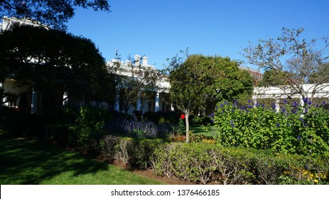 Washington DC,USA - Nov 19,2014:Rose garden in front of oval office in sunny day.