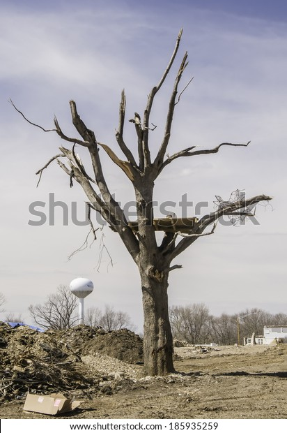 WASHINGTON, ILLINOIS, USA - MARCH 31, 2014: Debris from a house, perhaps, remains lodged in a tree blasted by a tornado on November 27, 2013 that devastated entire neighborhoods in this town.