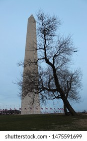 Washington Memorial with Silhouette of a Tree