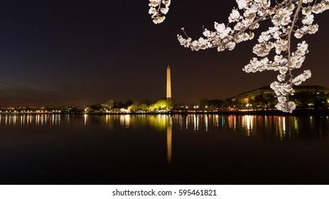 Washington Monument across Tidal Basin during cherry blossom festival, Washington DC. Washington Monument on dark blue night sky background in the dusk.