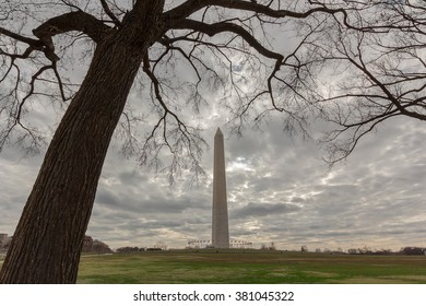 Washington Monument under Dramatic Sky from under Dead Tree in Winter, USA