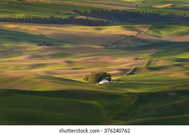 Washington Palouse. The palouse area is a major agricultural area, primarily producing wheat and legumes. The picturesque loess hills of the the Palouse Prairie can be viewed from Steptoe Butte Park.