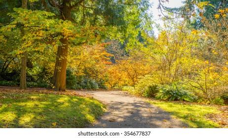 Washington park arboretum, Autumn