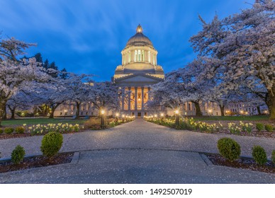 Washington State Capitol at night with cherry blossoms