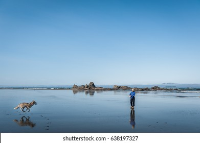 Washington State, USA - July 10, 2009 : scenic view of Ruby Beach with  running husky dog and woman, Olympic National Park,Washington State, USA