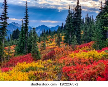 Washington, USA: Fall colors at Paradise area at Mount Rainier National Park