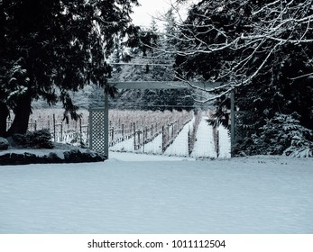 Washington vineyard after snow storm