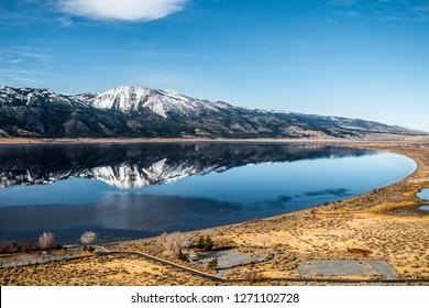 Washoe Lake bear Carson City, Northern Nevada