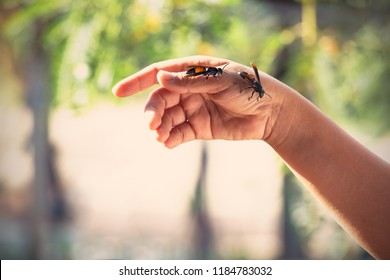 Wasp is attacking to the people's hand with blurred background.The vintage toner with hard light.