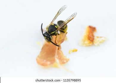 wasp eating a piece of bacon on a plate