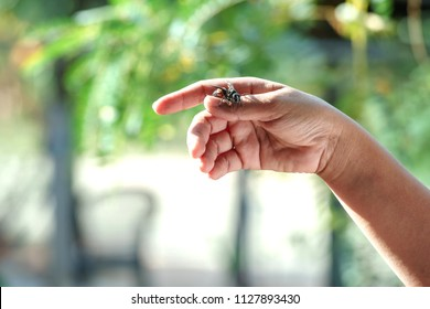 Wasp is hanging on the hand.It is the poisonous animal.There will be pain when attacked by sting.