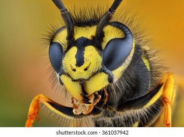 Wasp head Macro Shot Hot