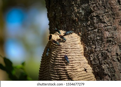 wasp hive on a tree on the farm