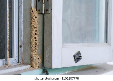 Wasp mud nest at house window.