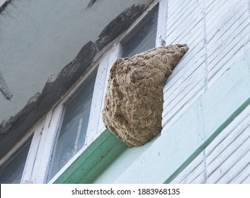 A wasp nest on a building exterior
