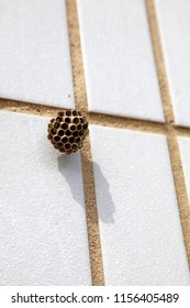 wasp nest on the tile