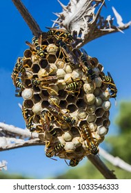 wasp nest on the tree branch