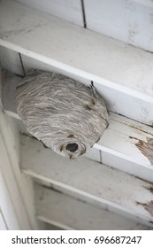 Wasp nest, vertical view, under eaves of old home