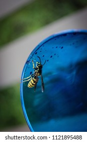 Wasp on a Cup, Alberta, 2014