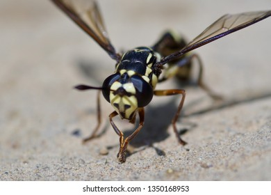 Wasp on the floor.