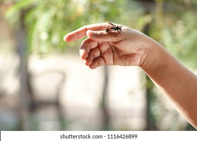 Wasp on hand with blurred background.It is the poisonous animal.There will be pain when attacked by sting.