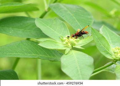 wasp on leaves