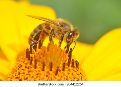 Wasp on a sun flower
