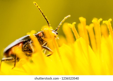 Wasp on a yellow wild flower, macro
