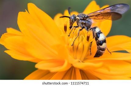 Wasp, Pollen, Flower, Yellow