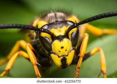 Wasp portrait. Insect extreme magnification photography. Very detailed and sharp