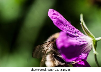 The wasp sits on a flower. Beautiful background. Flower and insect