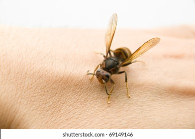 The wasp stop on the human hand