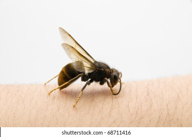 The wasp stop on the skin