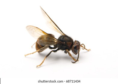 The wasp stop on the white background