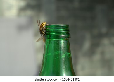 wasps go in the bottle