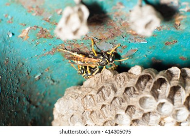 Wasps near the honeycomb