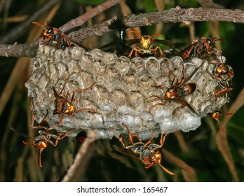 Wasps nest...