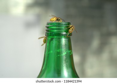 wasps are on the bottleneck