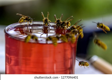 Wasps on glass with drink. Wasps feast. Wasps on the glass of sweet drink. Wasps are winged insects which has narrow waist and sting and is typically yellow with black stripes.