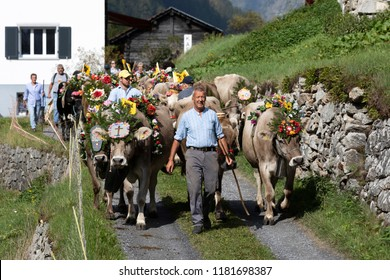 Wassen, Switzerland, September 15 2018: Ceremonial driving down of cattle from the mountain pastures Susten into the valley of Wassen in Canton Uri in autumn