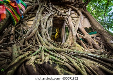 Wat Bang Kung, the old temple covered with banyan tree.Samut Sakhon Thailand