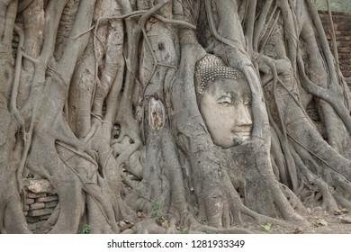 Wat Mahathat Ayuthaya Thailand, Head of Buddha inside the tree root